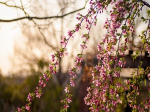 Delgadas ramas con flores y hojas