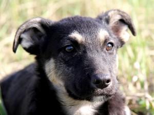 La cara de un bonito cachorro