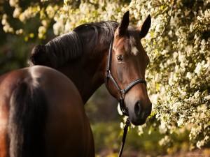 Un bonito caballo mirándote
