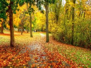 Parque cubierto con hojas caídas