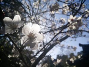 Sol iluminando las flores de un árbol