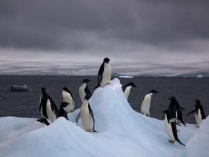 Pingüinos adelaida sobre un iceberg