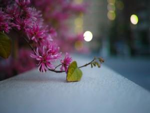 Destellos junto a una rama con flores