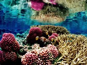 Peces entre corales