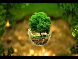Árbol creciendo en una esfera de cristal rota