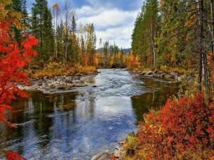 Río en otoño