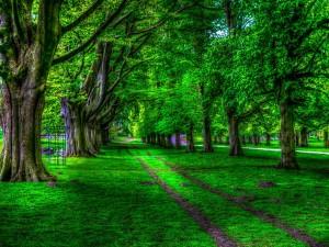 Árboles en verano junto a un camino