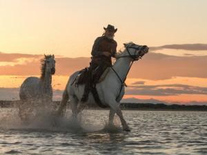 Jinete en el río con dos caballos