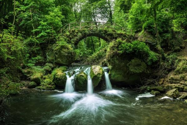 Puente de piedra cubierto de plantas verdes sobre un río