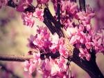 Un árbol florecido
