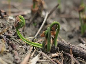 Plantas creciendo entre hojarasca