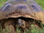 Una gran tortuga