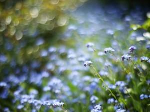 Pequeñas flores silvestres de color azul
