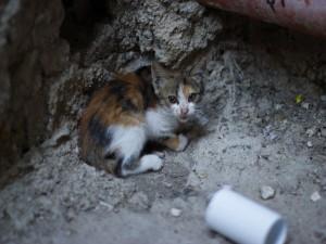 Un gatito asustado