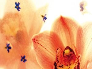 Orquídea y pequeñas flores azules