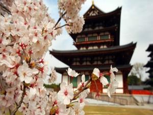 Árbol en flor junto a un templo oriental