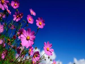 Bonitas flores en el campo