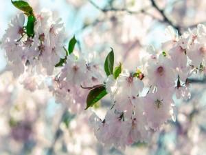 Flores y hojas en las ramas de un árbol frutal