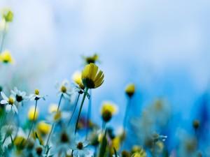 Flores silvestres blancas y amarillas