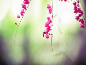 Abeja en una rama con flores rosas