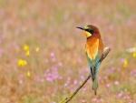 Pájaro con plumas de colores posado en una rama