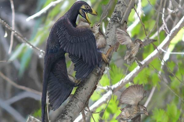 Microraptor cazando pájaros