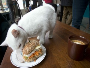 Gato sobre una mesa comiendo un bocadillo