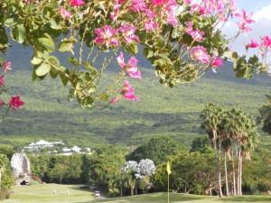 Grandes palmeras en un campo de golf