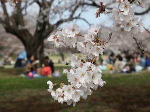 Picnic en primavera