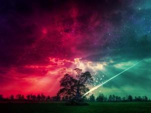 Cielo de diferentes colores sobre un árbol