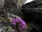 Flores creciendo en unas rocas