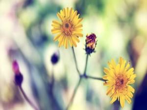 Flores amarillas en el mismo tallo