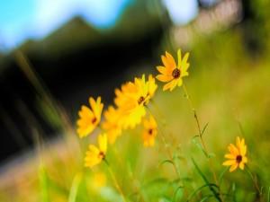 Flores con brillantes pétalos amarillos