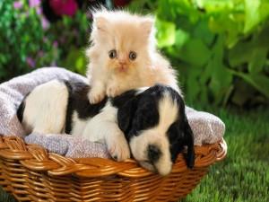 Un gatito y un perrito en una cesta