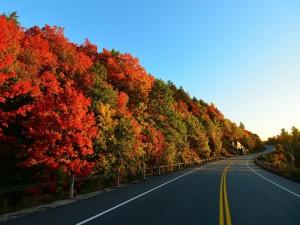Árboles en otoño junto a una carretera