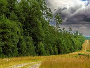 Árboles verdes en el campo