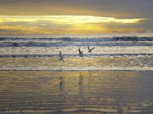 Gaviotas volando sobre las olas
