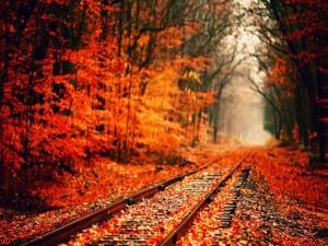 Hojas otoñales sobre la vía del tren