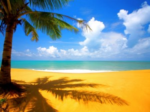 La sombra de una palmera sobre la arena de la playa