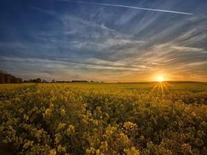 Sol asomando por el horizonte