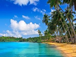 Grandes palmeras en una playa