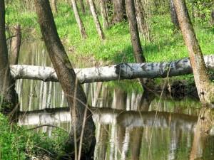 Árbol caído sobre un río