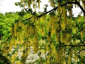 Hermoso árbol junto a un río