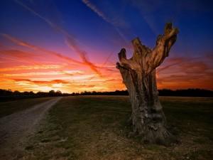 Un robusto árbol sin hojas