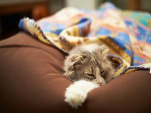 Un gato adormilado
