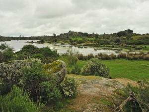 Lago en una pradera verde