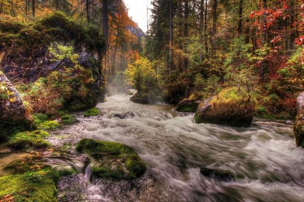El cauce de un río en otoño