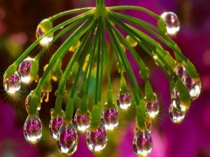Gotas de agua en lo extremos de una flor