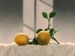 Dos limones junto a una rama