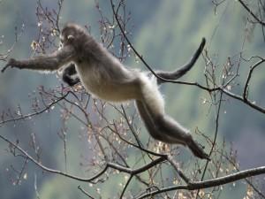 Mono saltando de rama en rama